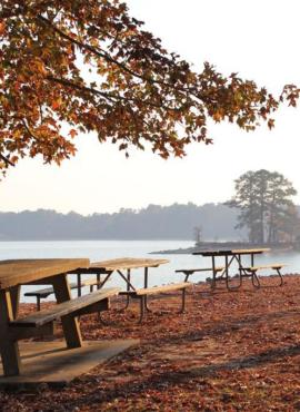Pinic (Alabamastateparks.com)
